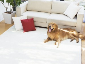 dog-by-sofa--modern-lifestyle--interiors-wallpaper-92625[1]